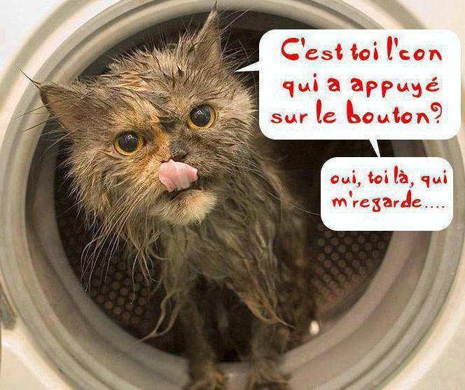Petite blagounette  - Page 2 Le_cha10