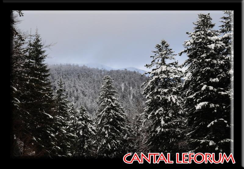 Le Plomb du Cantal Dsc_0714