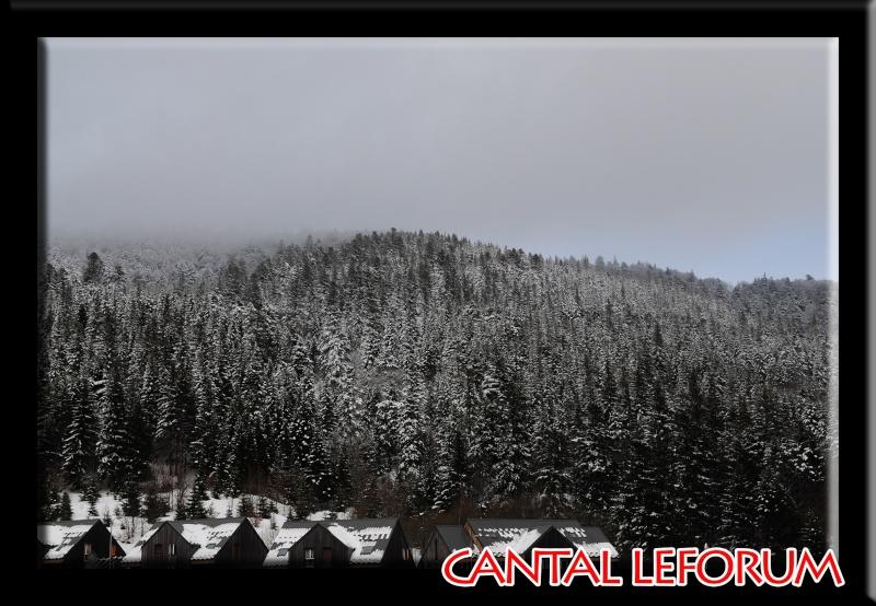 Le Plomb du Cantal Dsc_0715