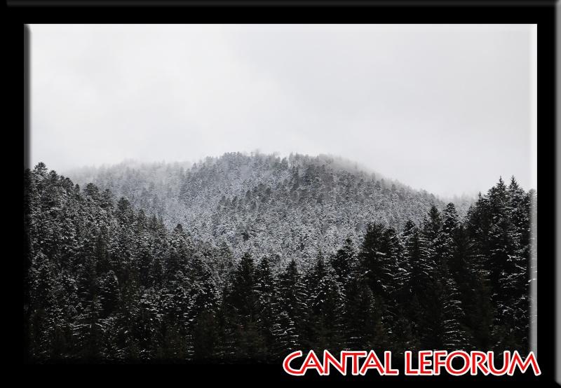 Le Plomb du Cantal Dsc_0716