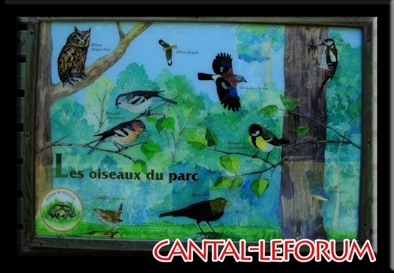Parc de Poulainville à Condat Dsc_9213