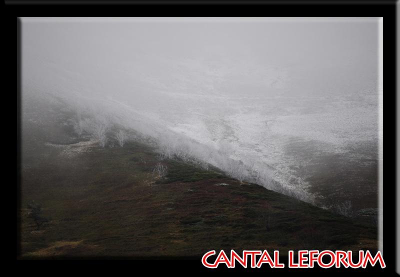 Le Plomb du Cantal Dsc_9419