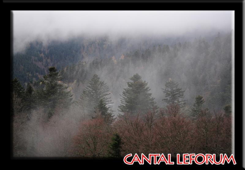 Le Plomb du Cantal Dsc_9420