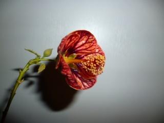 identif. fleur. P1020428