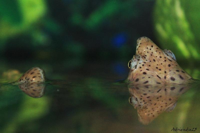 Nouvel aquarium pour les Sternotherus Img_0014