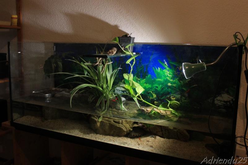 Nouvel aquarium pour les Sternotherus Img_0611