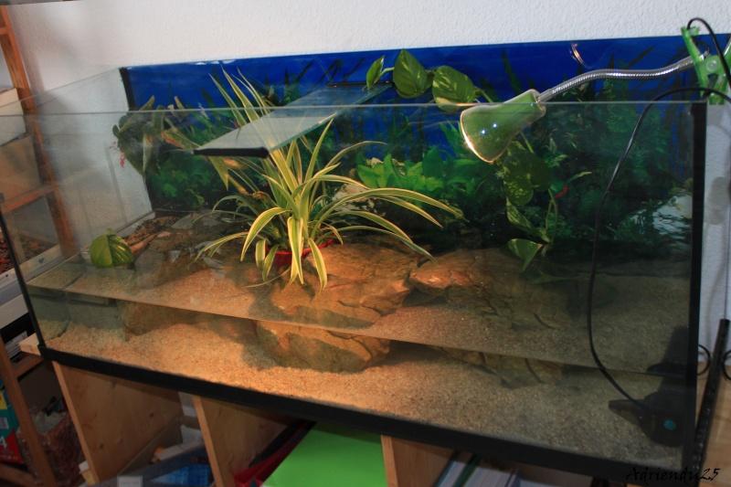Nouvel aquarium pour les Sternotherus Img_9910