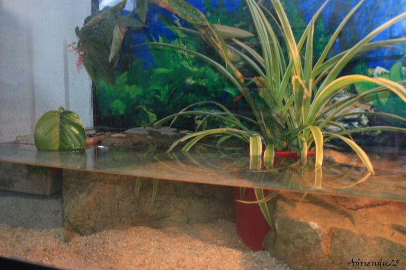 Nouvel aquarium pour les Sternotherus Img_9911