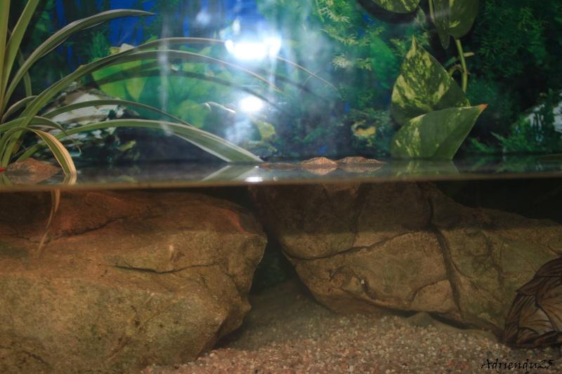 Nouvel aquarium pour les Sternotherus Img_9915