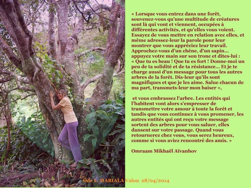communiquer avec les arbres... 10154410