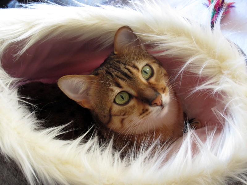E'Sethi Accuente, le chaton voyageur - Page 14 Galaig10