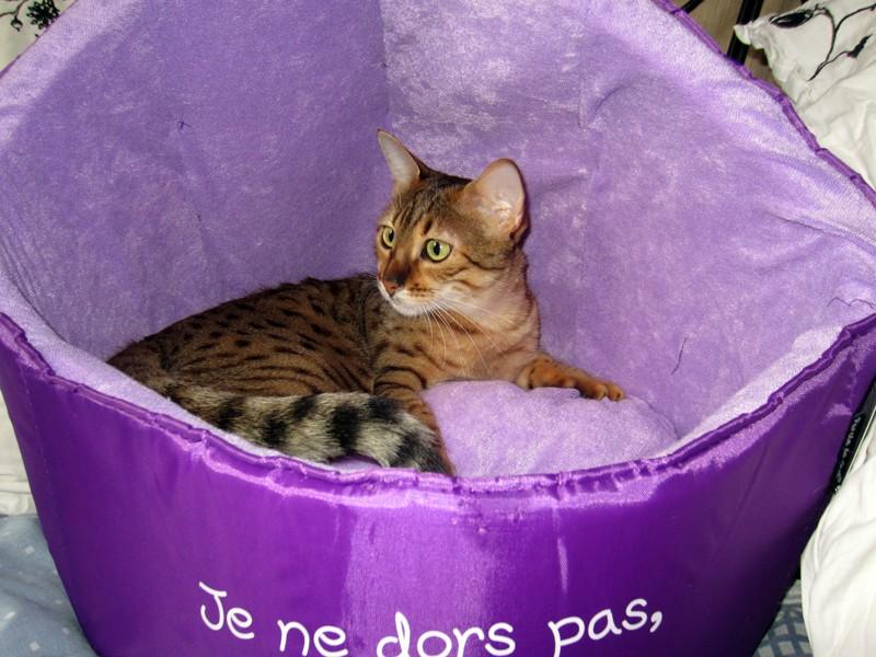 E'Sethi Accuente, le chaton voyageur - Page 11 Galapa10