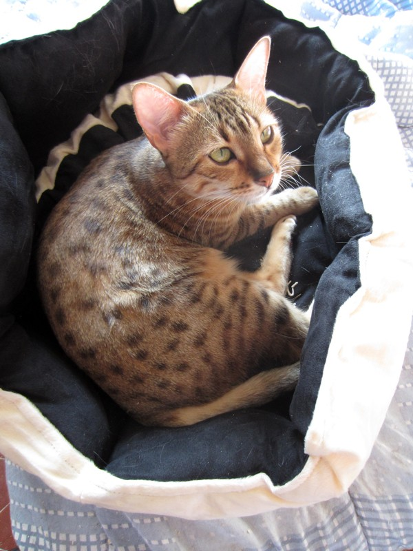 E'Sethi Accuente, le chaton voyageur - Page 12 Galapa11