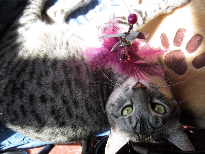 E'Sethi Accuente, le chaton voyageur - Page 14 Plumea10