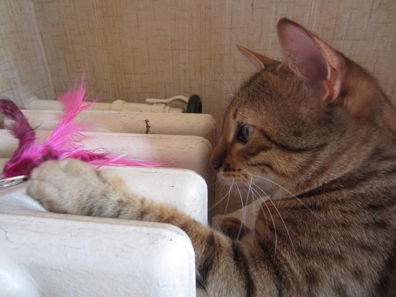 E'Sethi Accuente, le chaton voyageur - Page 14 Plumea11