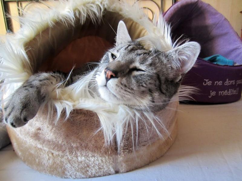 E'Sethi Accuente, le chaton voyageur - Page 14 Sethig11