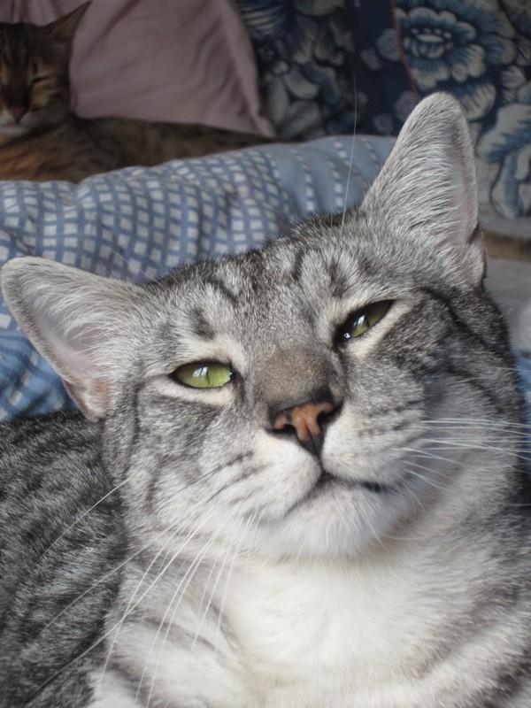 E'Sethi Accuente, le chaton voyageur - Page 11 Sethin10