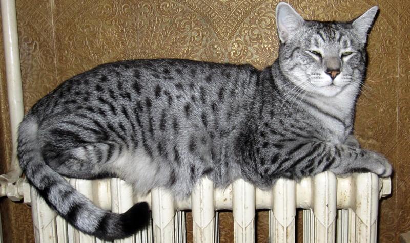 E'Sethi Accuente, le chaton voyageur - Page 13 Sethir10