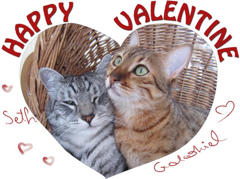E'Sethi Accuente, le chaton voyageur - Page 14 Valent10
