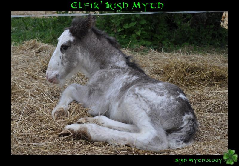 Elfik' Irish Myth: Splashy x Uragan-Irish Mythology Dsc_0115