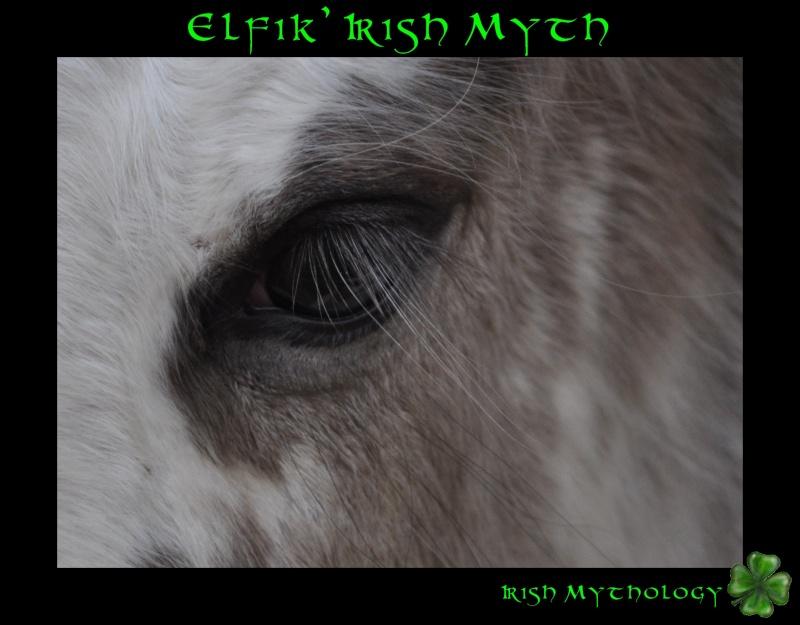 Elfik' Irish Myth: Splashy x Uragan-Irish Mythology Dsc_0116