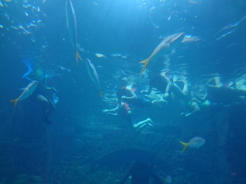 Notre Voyage à Paradise Island ( Bahamas ) Juille21