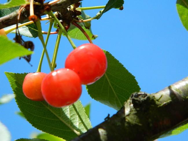 Abres fruitiers ou pas Dscn2134