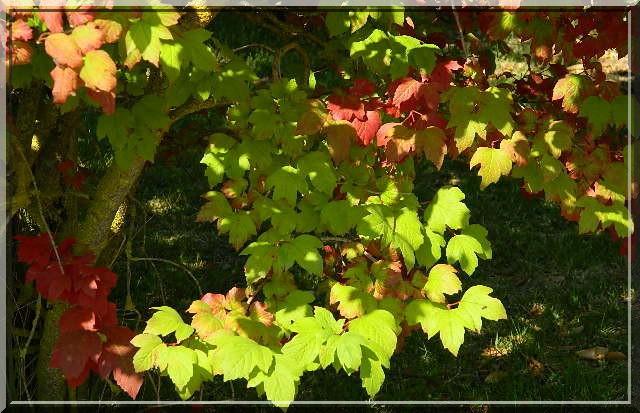 Couleurs d'automne Dscn2314