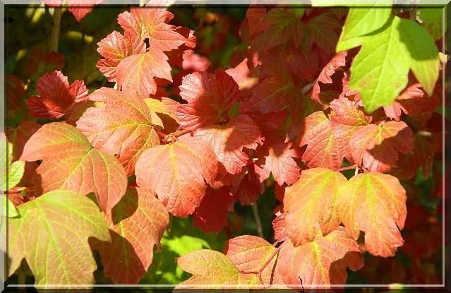 Couleurs d'automne Dscn2315