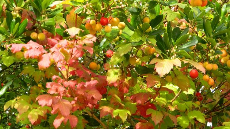 Couleurs d'automne Dscn2437