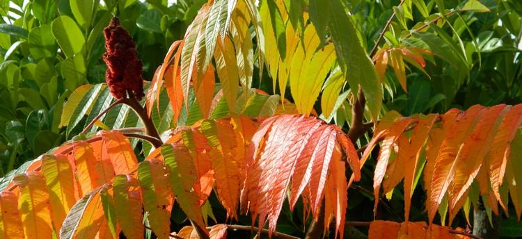 Couleurs d'automne Dscn2438