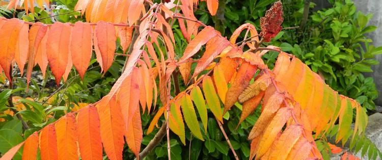 Couleurs d'automne Dscn2439