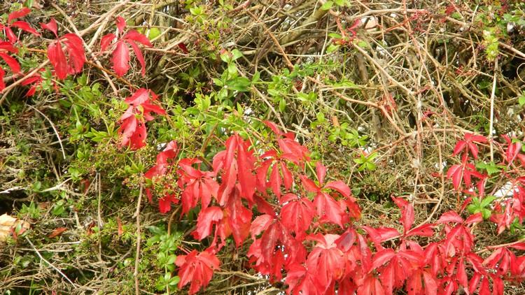 Couleurs d'automne Dscn2447