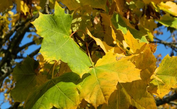 Couleurs d'automne Dscn2459