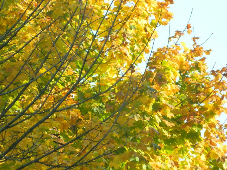 Couleurs d'automne Dscn2460