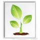 المنتدى النباتي