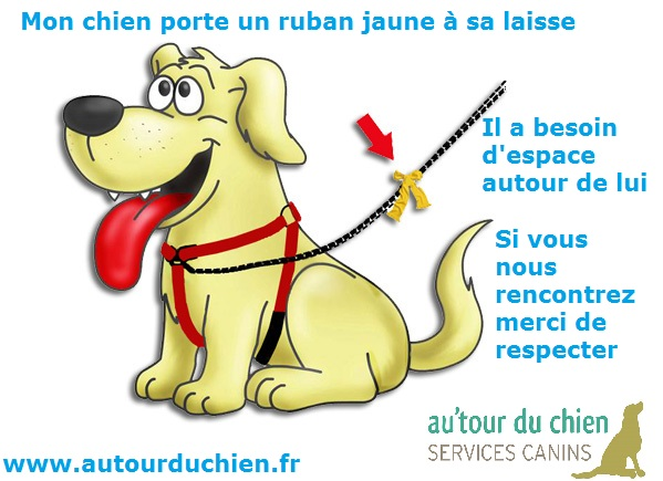 DINOS: le ruban jaune pour les chiens qui ont besoin d'espace  - Page 5 Ruban-10
