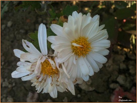 Motiv fotografiranja: Biljke, Cvijeće, Cvijet, Drveće... 2013-118