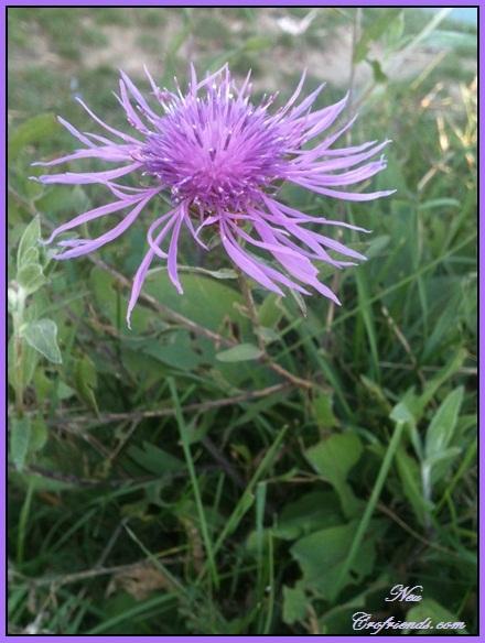 Motiv fotografiranja: Biljke, Cvijeće, Cvijet, Drveće... 2013-119