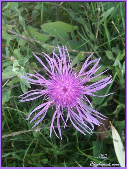 Motiv fotografiranja: Biljke, Cvijeće, Cvijet, Drveće... 2013-120