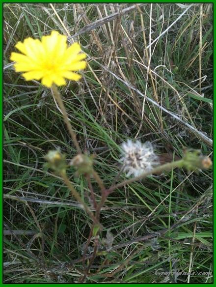 Motiv fotografiranja: Biljke, Cvijeće, Cvijet, Drveće... 2013-121