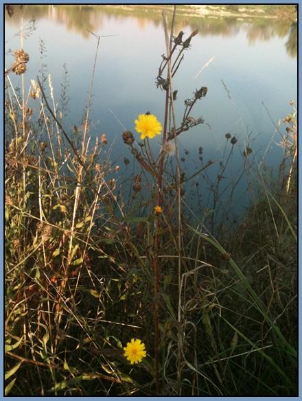 Motiv fotografiranja: Biljke, Cvijeće, Cvijet, Drveće... 2013-123