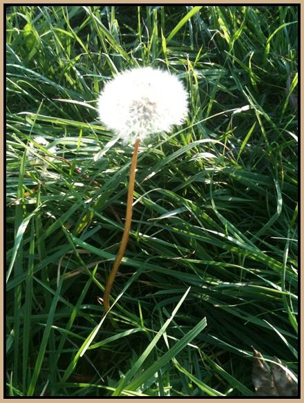 Motiv fotografiranja: Biljke, Cvijeće, Cvijet, Drveće... 2013-124