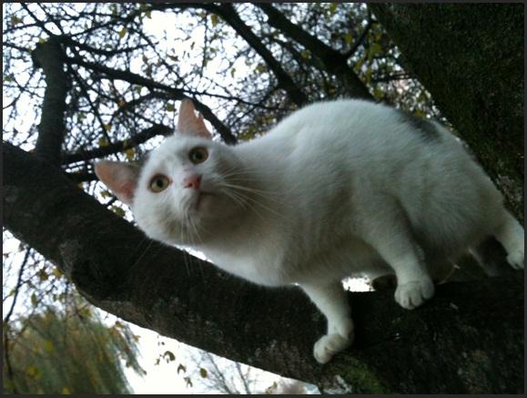 Motiv fotografiranja: mačke 2013-177