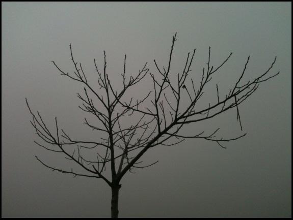 Motiv fotografiranja: magla 511