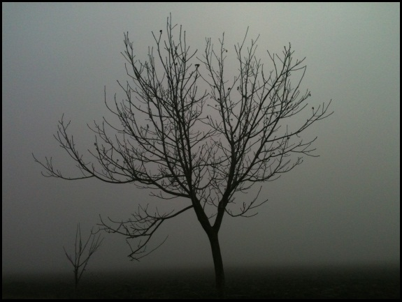 Motiv fotografiranja: magla 611