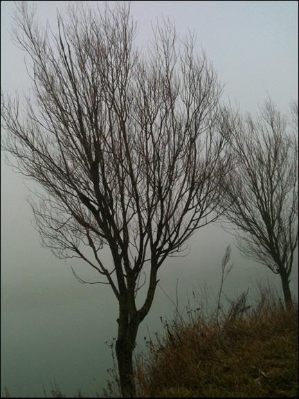 Motiv fotografiranja: magla 710