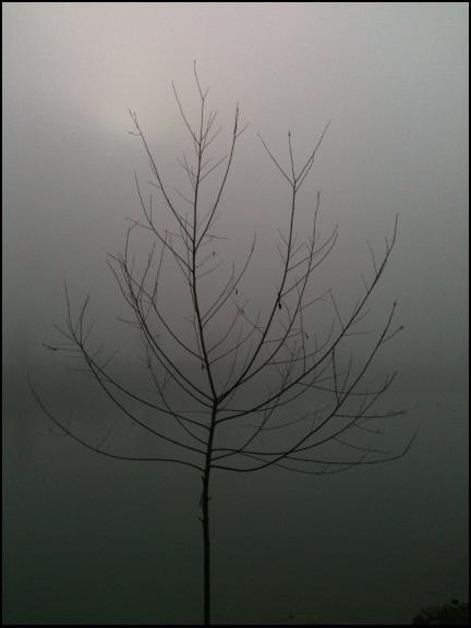 Motiv fotografiranja: magla 810