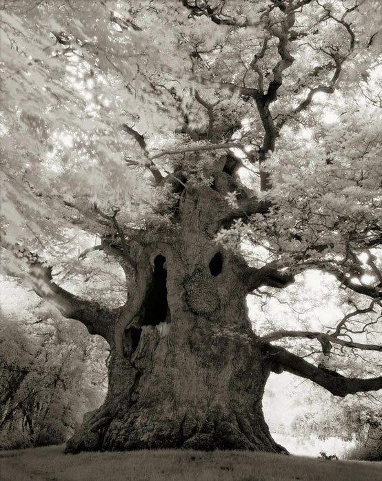 The Fairy Tale Bonsai Style Bild_110