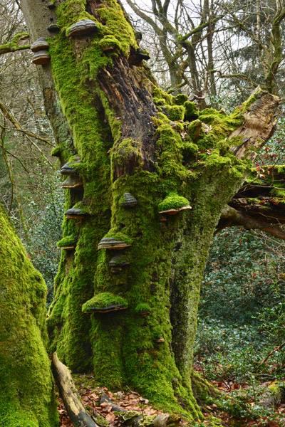 The Fairy Tale Bonsai Style Bild_111